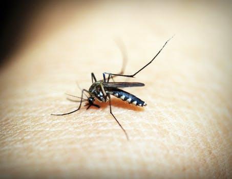 best mosquito repellent-wonderparenting