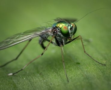 best insect repellent-wonderparenting