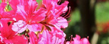 flowering-shrubs-wonderparenting